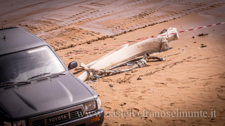 foto-balena-triscina-cnr-10