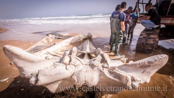 foto-balena-triscina-cnr-17-580x326