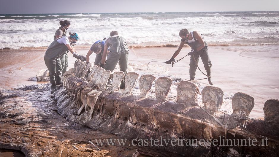 foto-balena-triscina-cnr-24