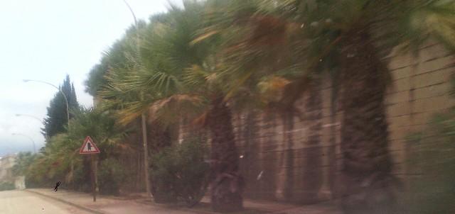 palme (3)